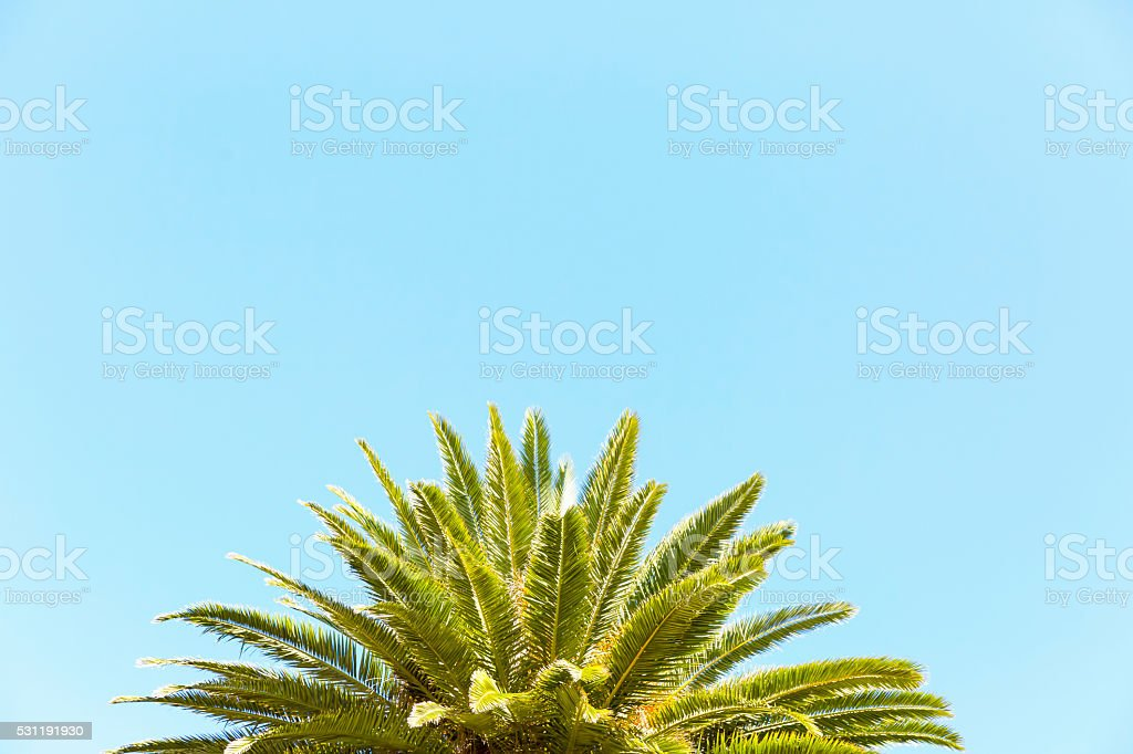 Leaves of palm tree against blue sky, background, copy space stock photo