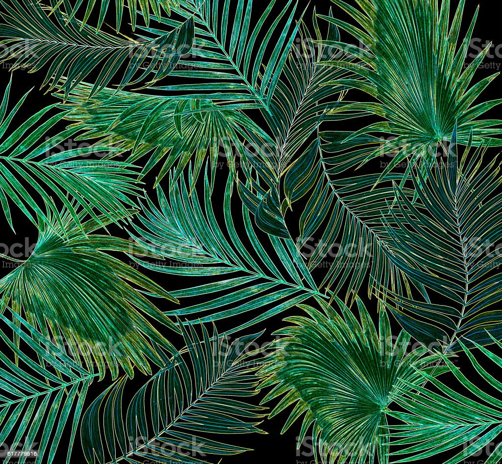 leaves of palm tree on black background stock photo