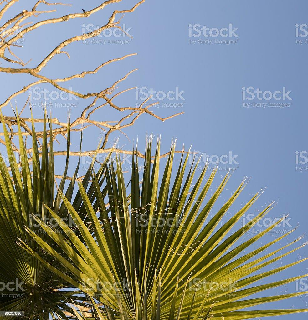Folhas de Palmeira foto de stock royalty-free