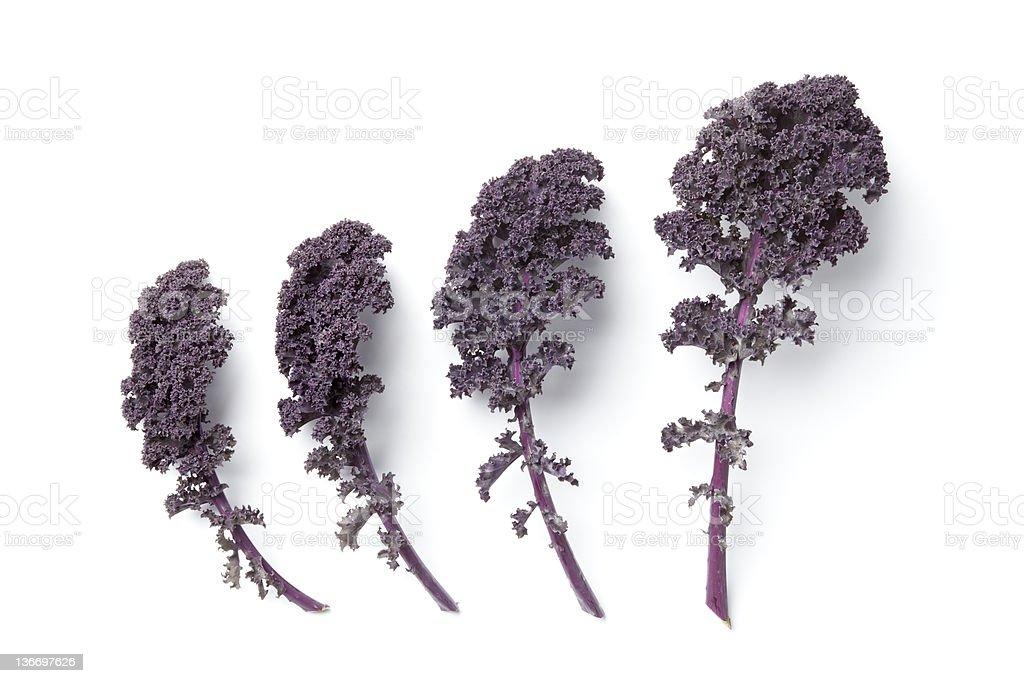 Leaves of purple kale stock photo