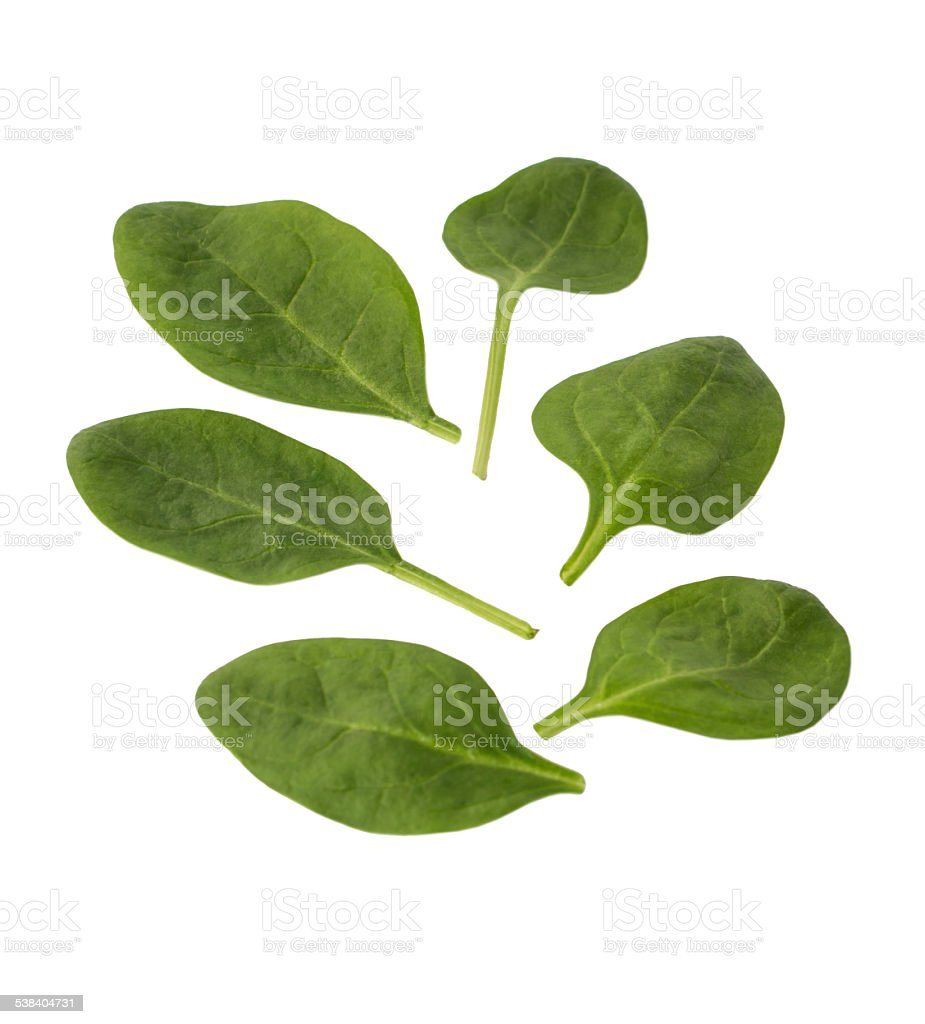 leaves of spinach isolated on white background stock photo