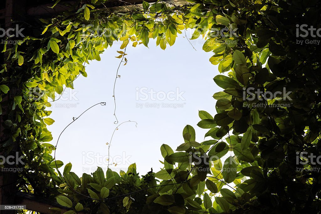 leaves of spring in the sky background stock photo