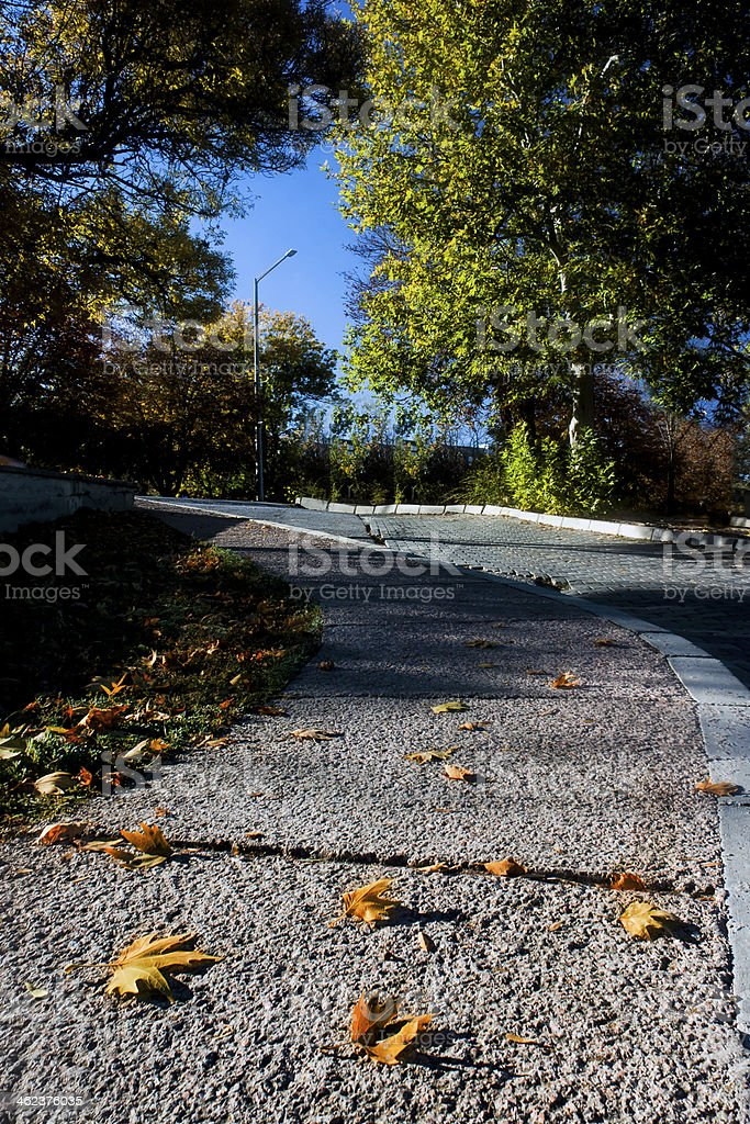 Leaves of the Campus royalty-free stock photo