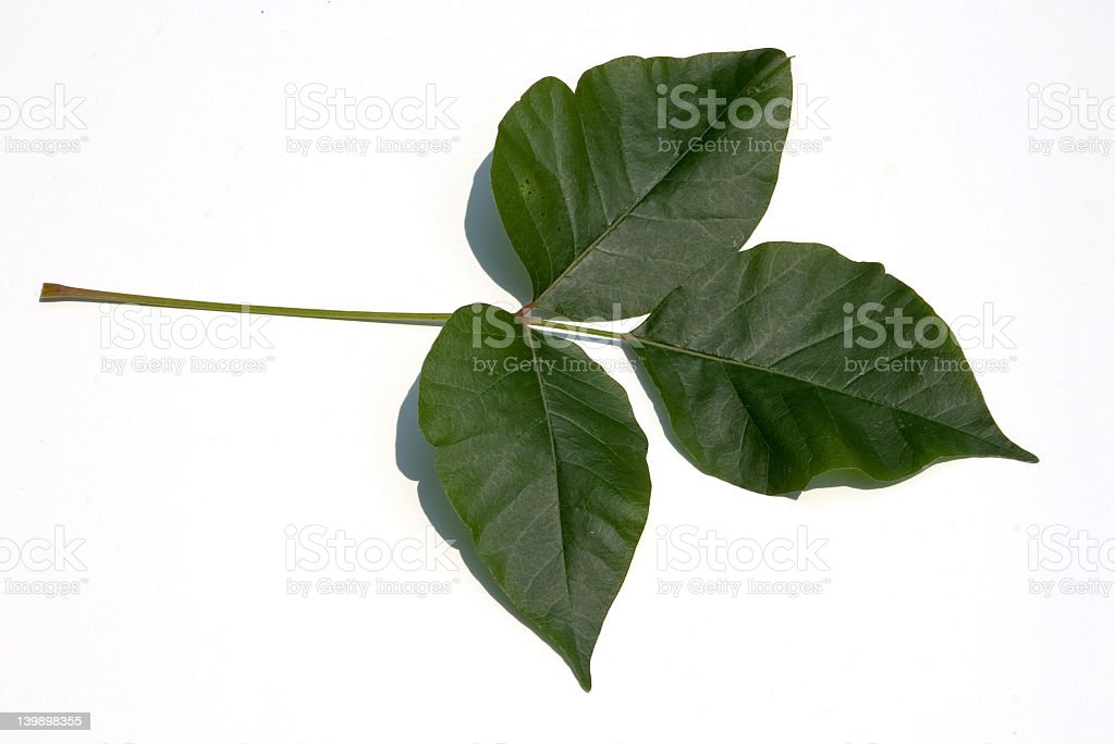 Leaves of three, let it be stock photo