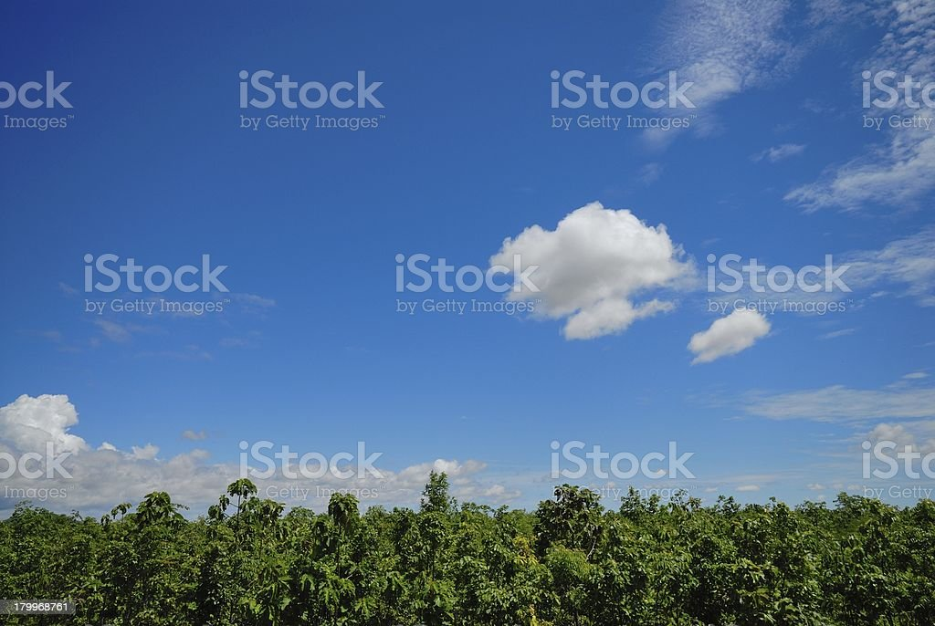 leaves of tree and blue sky with clouds royalty-free stock photo