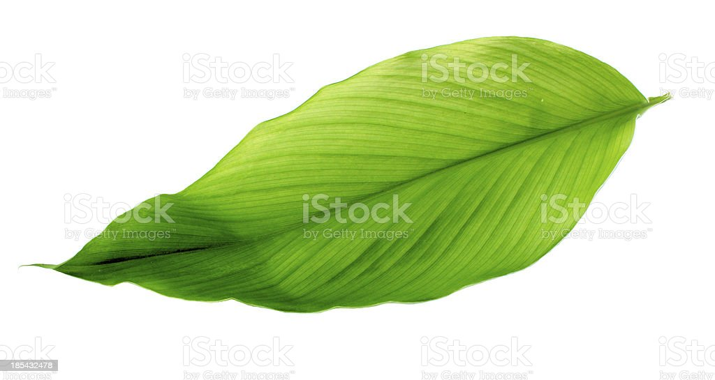 leaves of turmeric royalty-free stock photo
