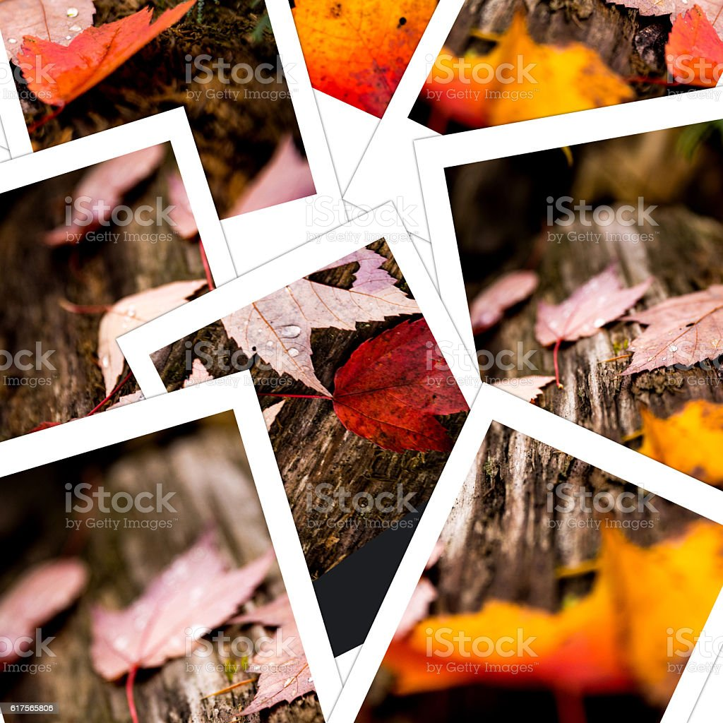Leaves on a log in the fall season stock photo