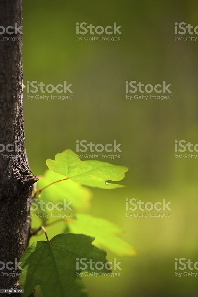 Leaves on a tree trunk royalty-free stock photo