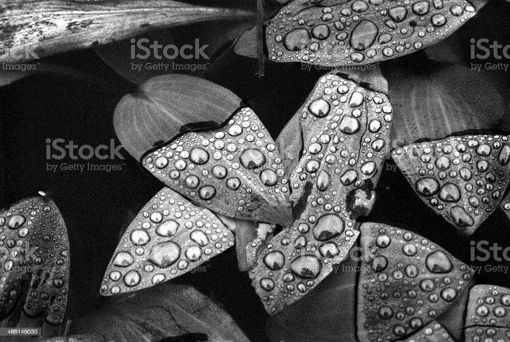 Leaves on a water surface stock photo