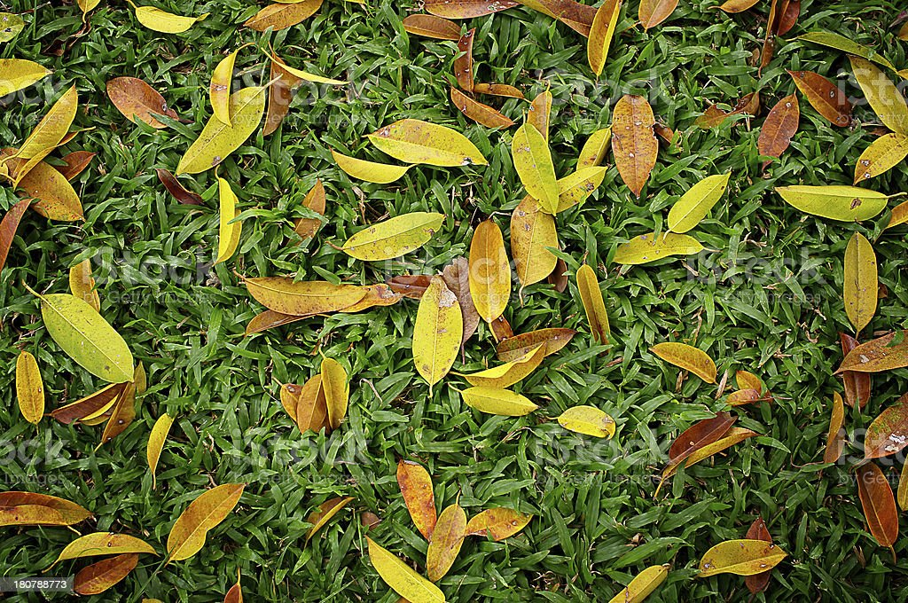 Leaves on green sward royalty-free stock photo