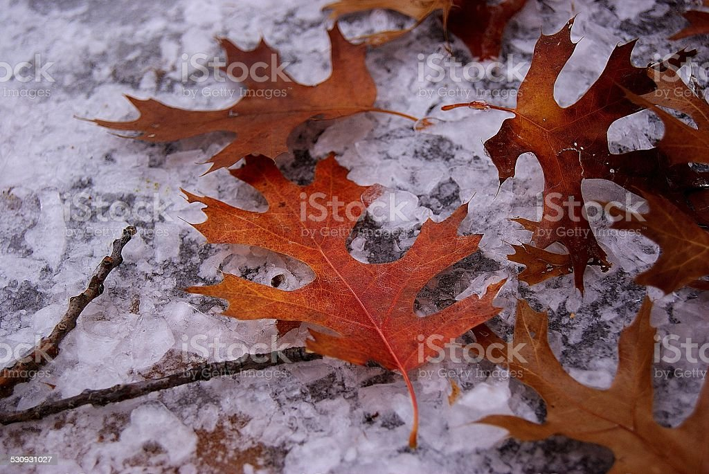 Leaves on Ice Chunks royalty-free stock photo
