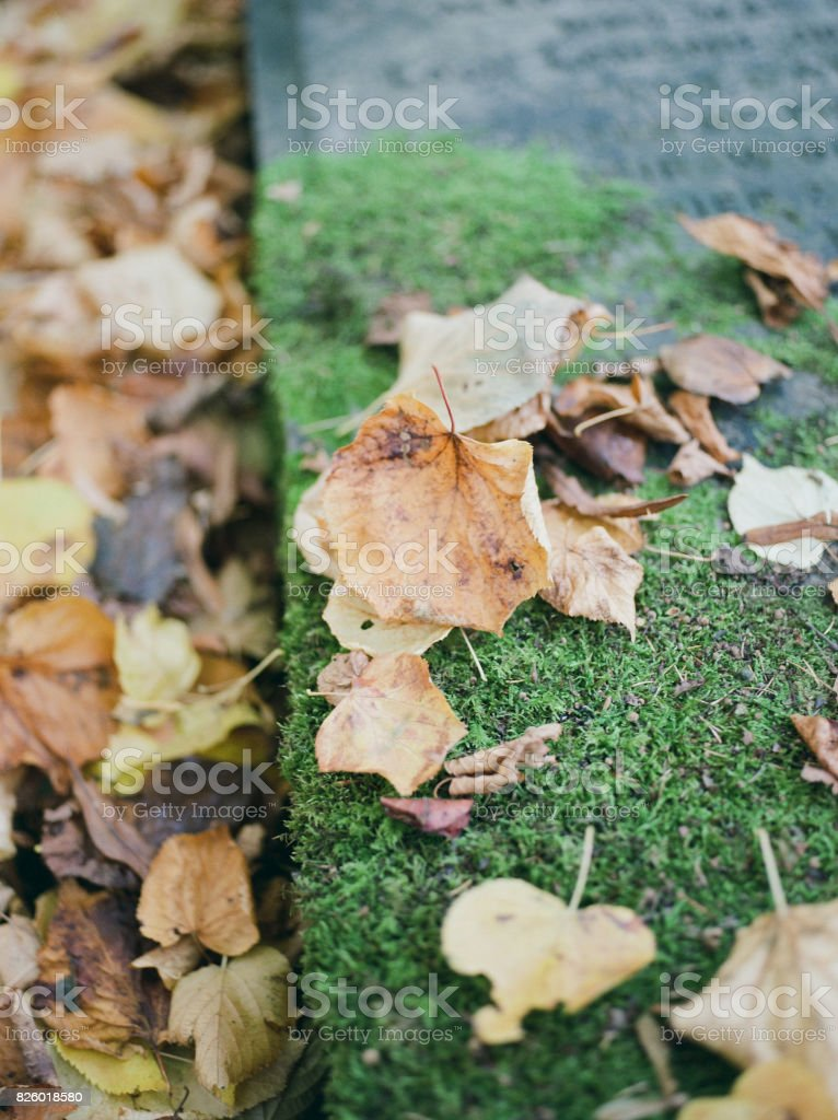 Leaves on Mossy Stone stock photo