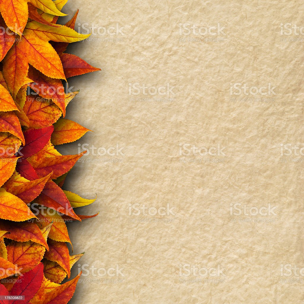 Leaves on paper background royalty-free stock photo
