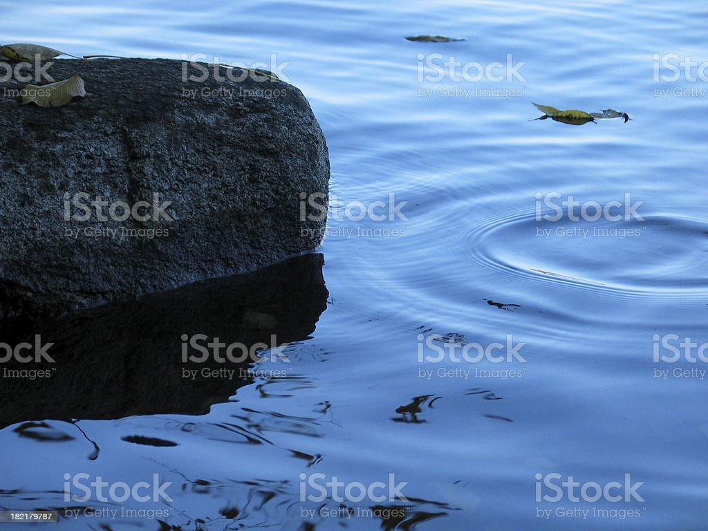 Leaves on Ripples stock photo