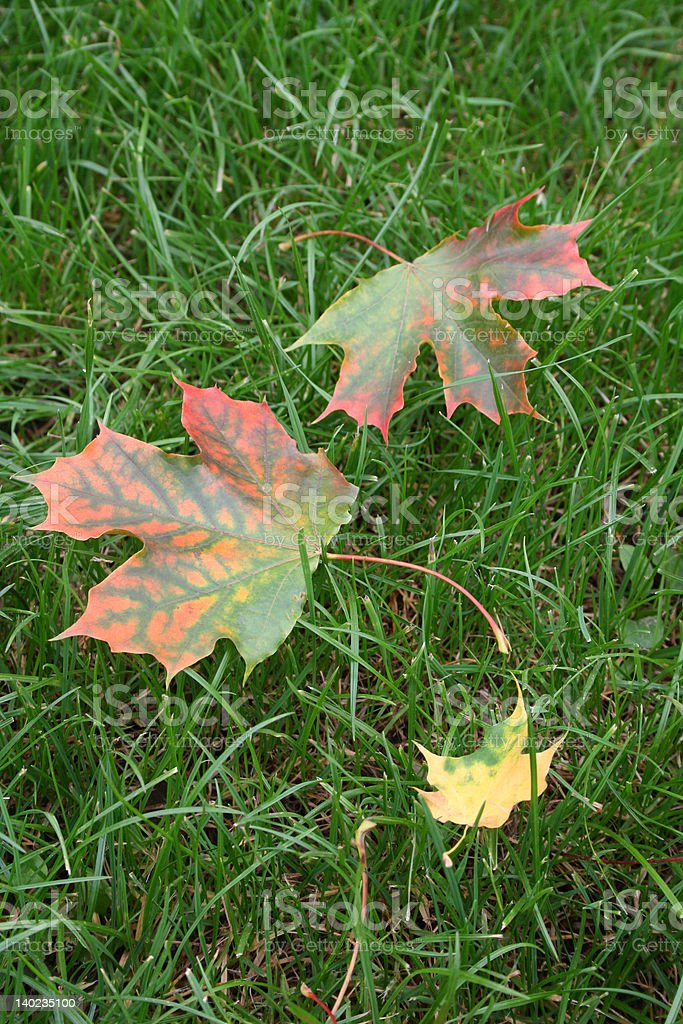 leaves on the grass royalty-free stock photo