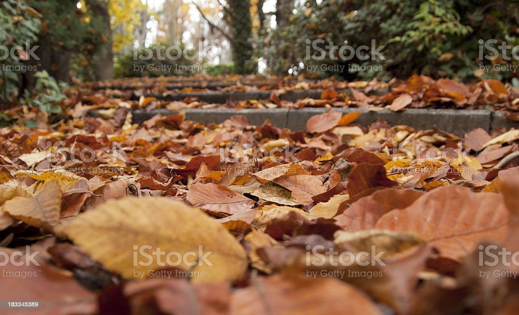 Leaves on the steps stock photo