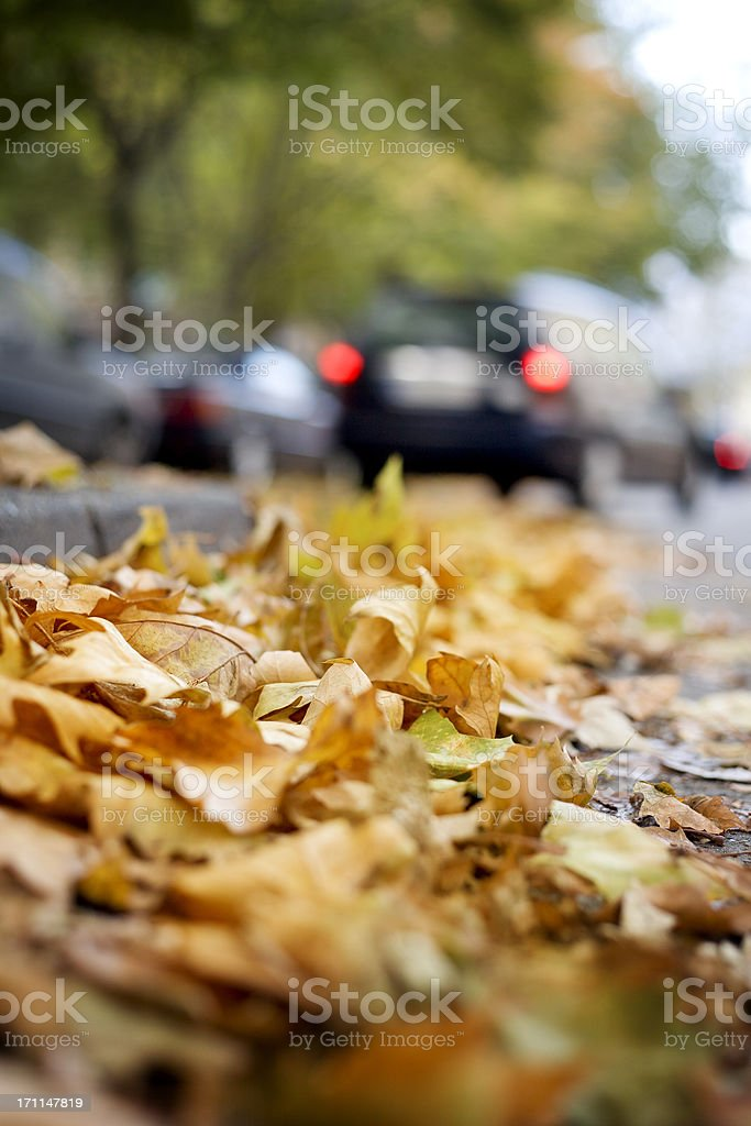 Leaves on the street - autumnal urban scene royalty-free stock photo