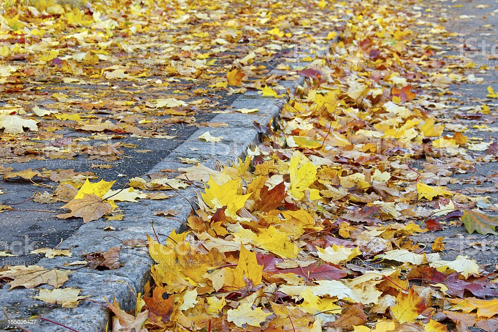Leaves on the street royalty-free stock photo