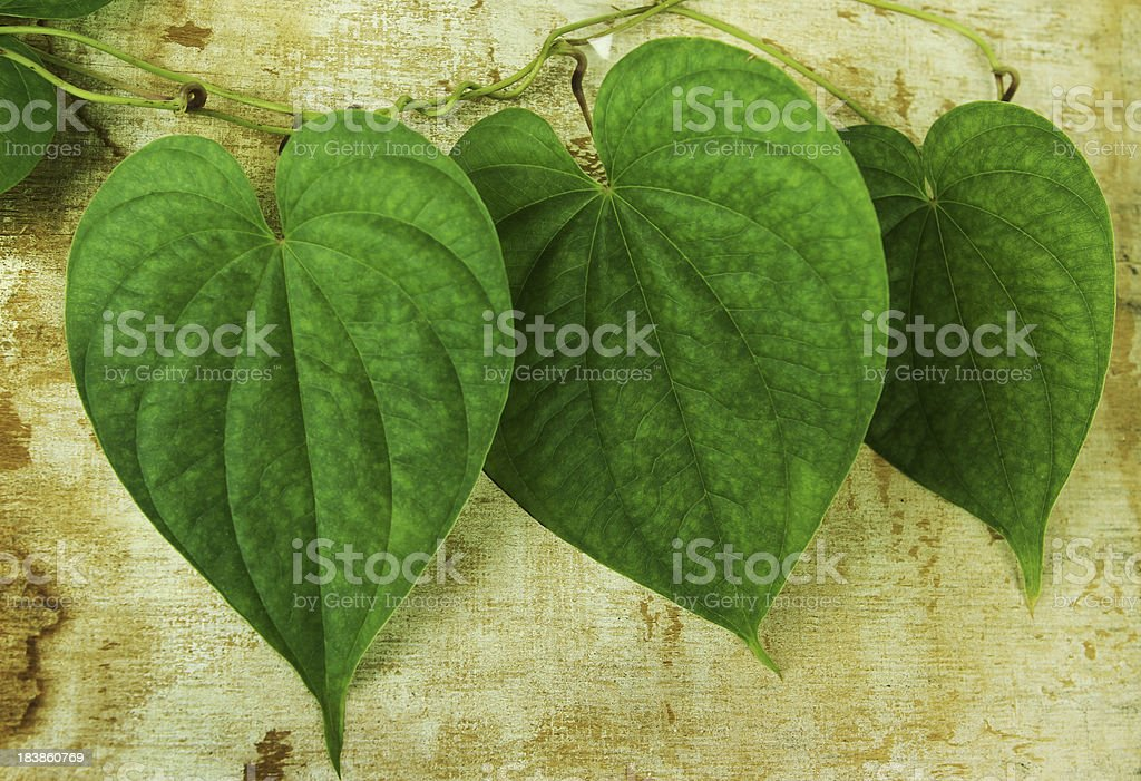 Leaves on the Wall. royalty-free stock photo
