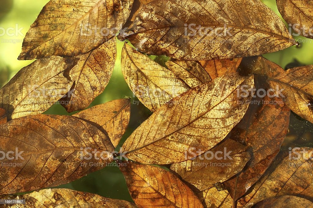 Leaves on the water royalty-free stock photo
