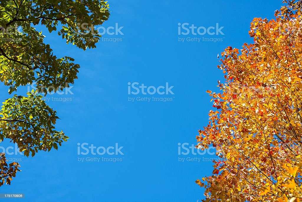 Summer and Autumn season changes stock photo
