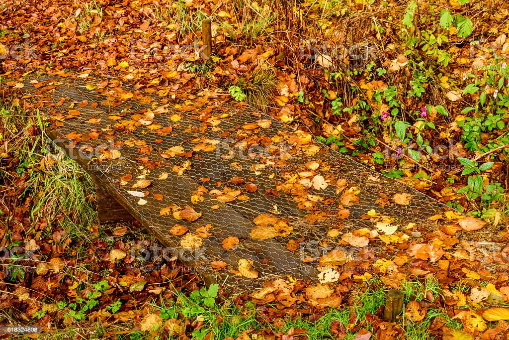 Leaves on walkway stock photo