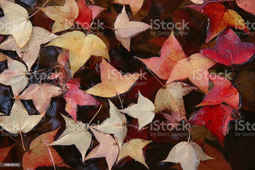 Leaves on Water royalty-free stock photo