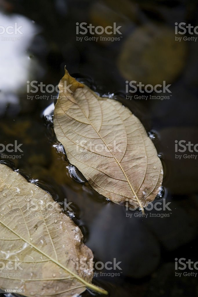 Leaves on water stock photo