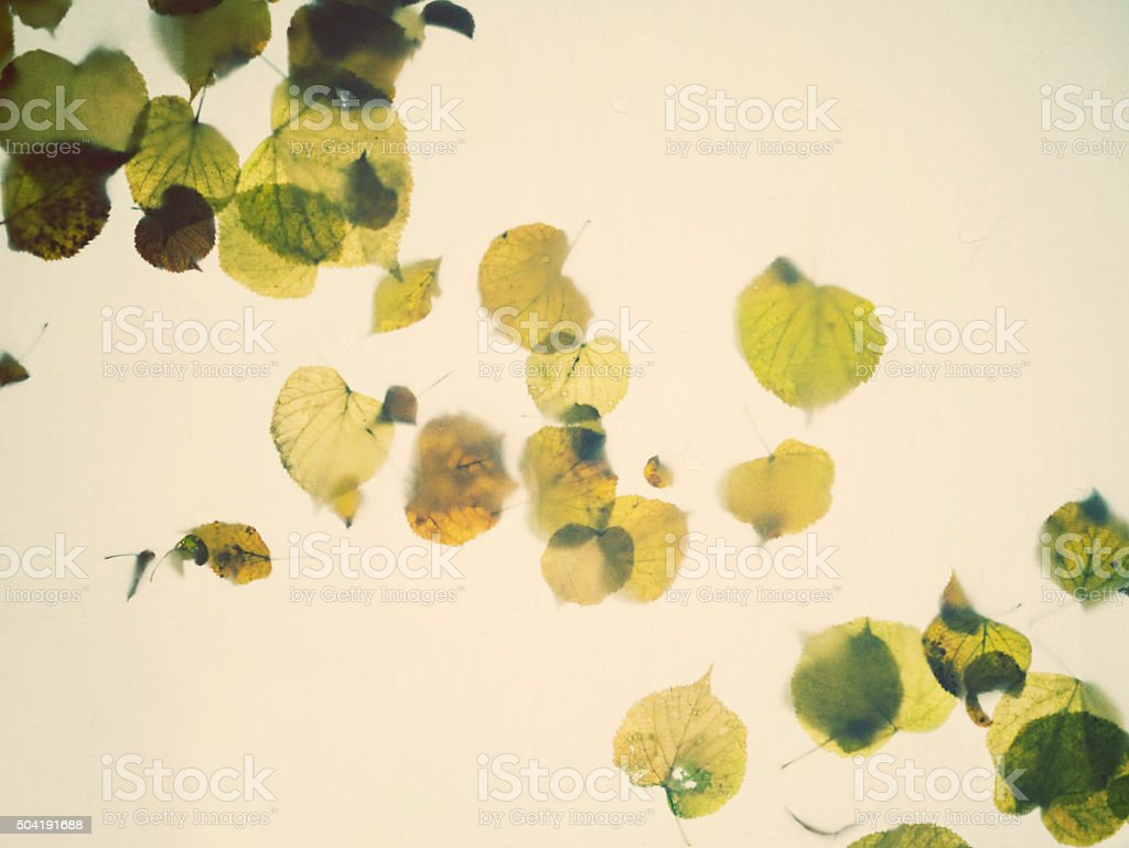 Leaves on wet fabric stock photo