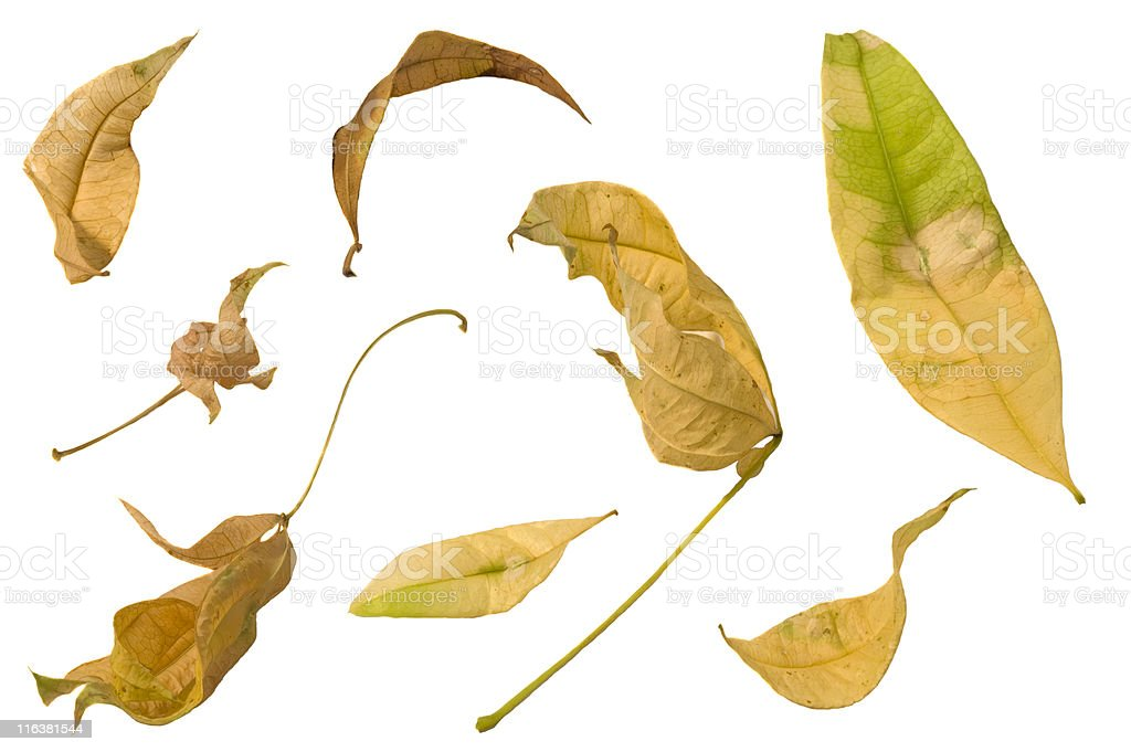 Leaves On White royalty-free stock photo