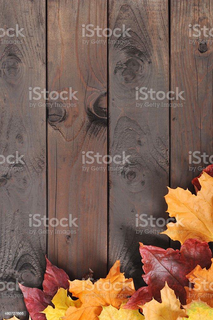 leaves on wood stock photo