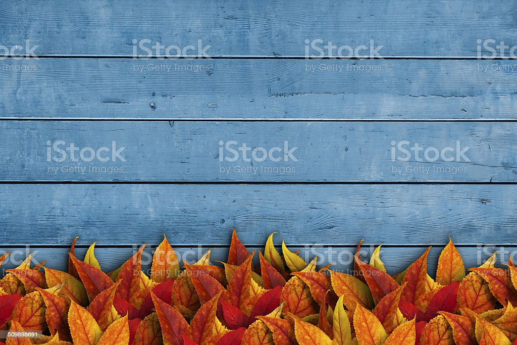 Leaves on wooden background stock photo