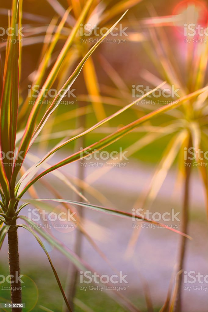 Leaves over sun flare royalty-free stock photo