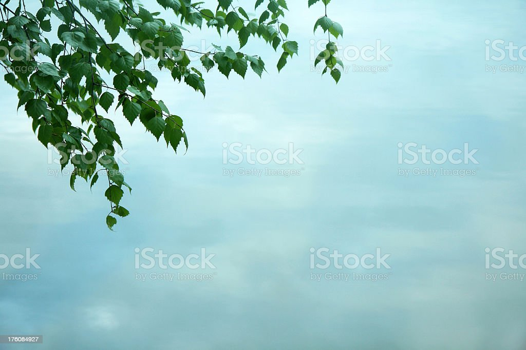 leaves over water royalty-free stock photo