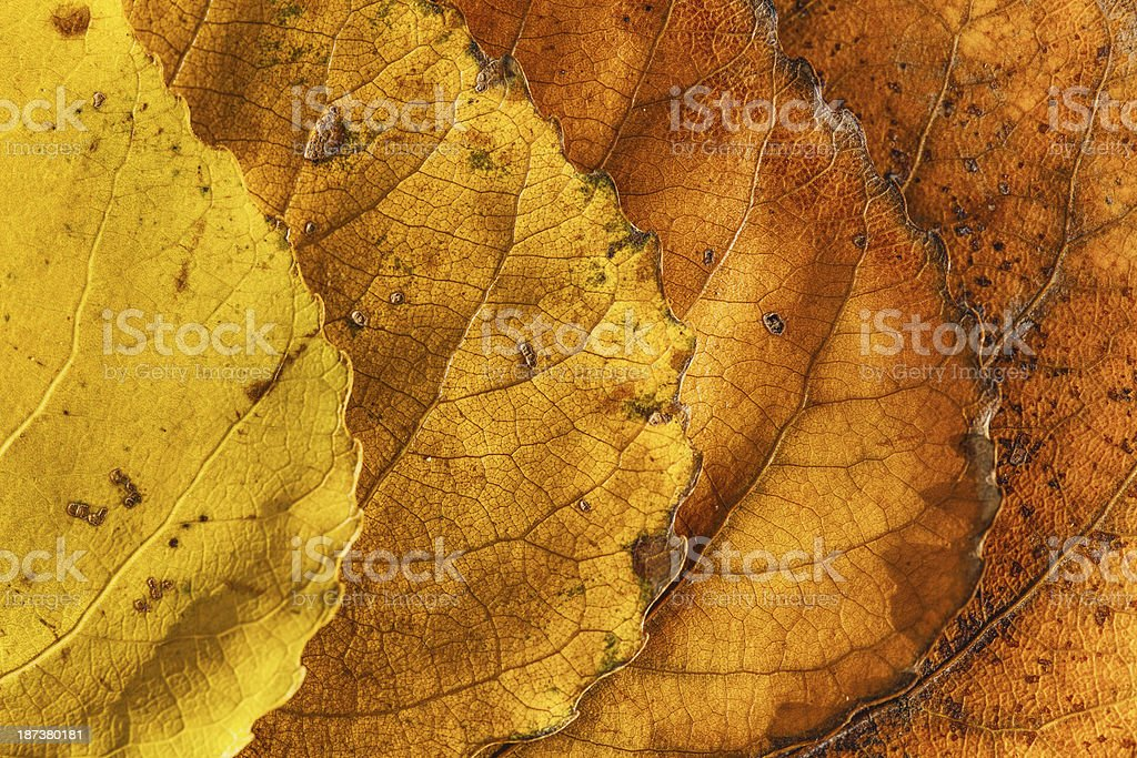 Leaves pattern royalty-free stock photo