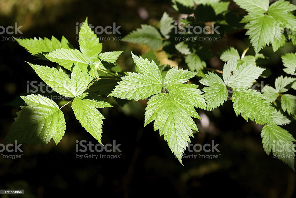 Leaves stock photo