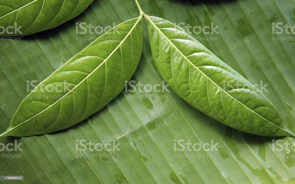 Blätter Lizenzfreies stock-foto