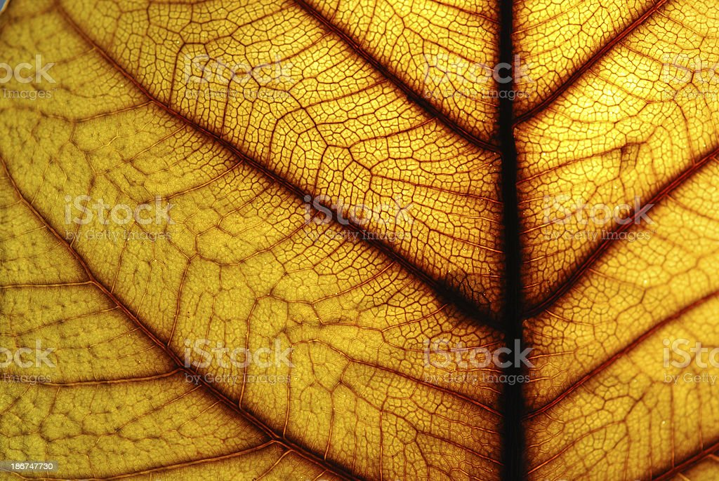 Leaves. royalty-free stock photo