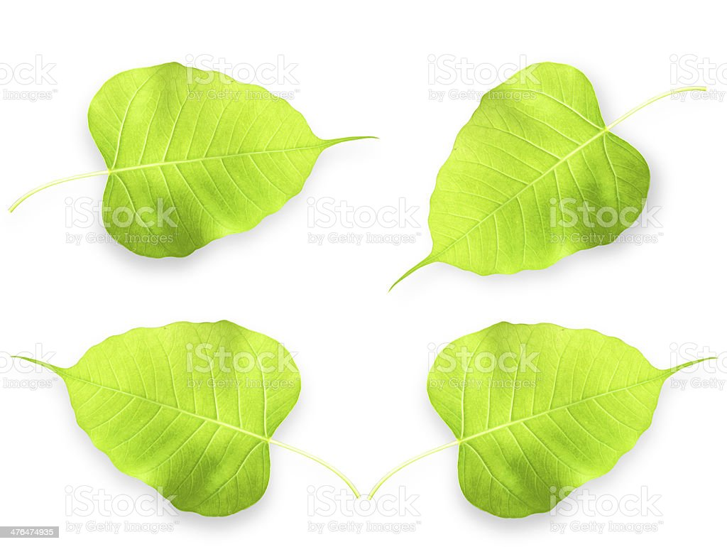 Leaves royalty-free stock photo