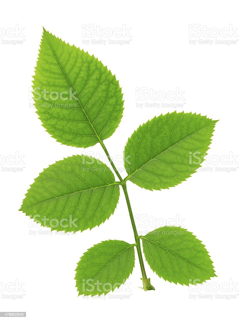 Leaves. stock photo