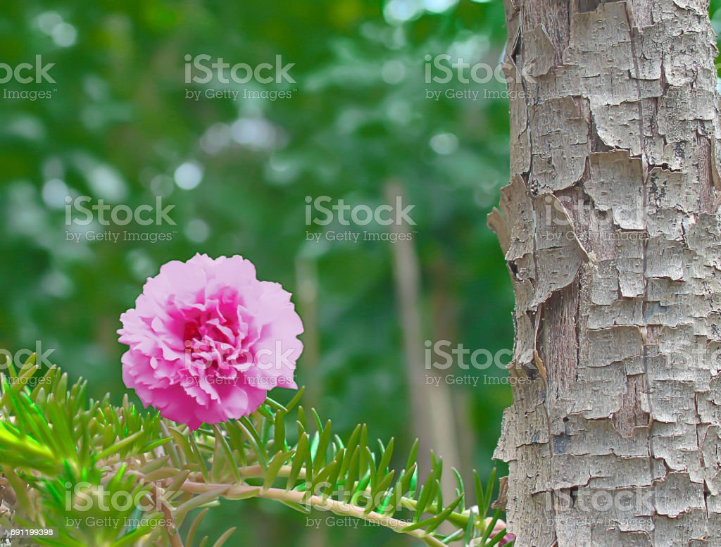 Leaves Portulaca oleracea Flower on blurred background. stock photo