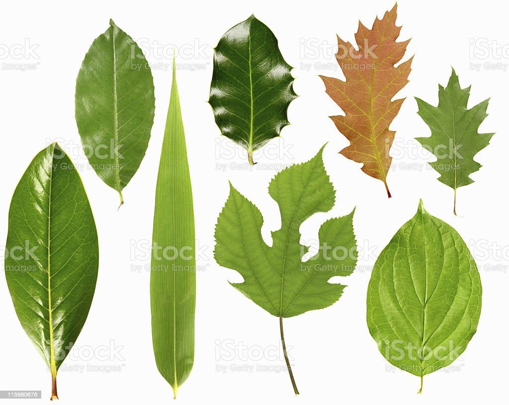 Leaves selection royalty-free stock photo