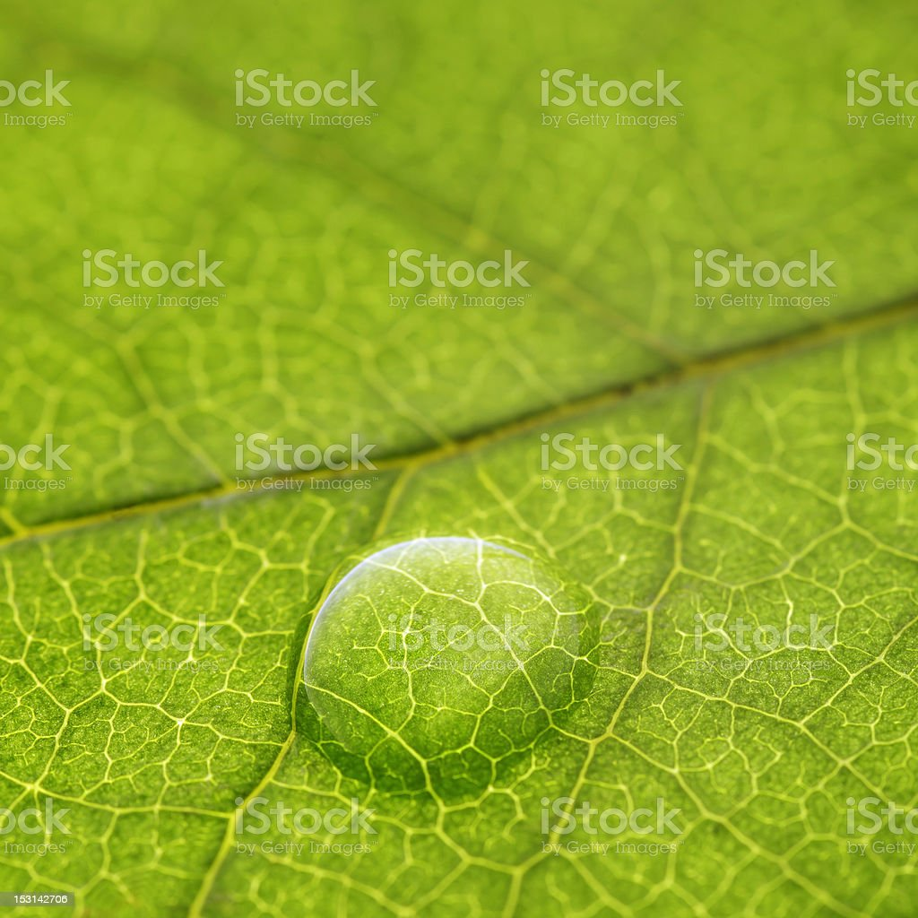 Leaves Series royalty-free stock photo