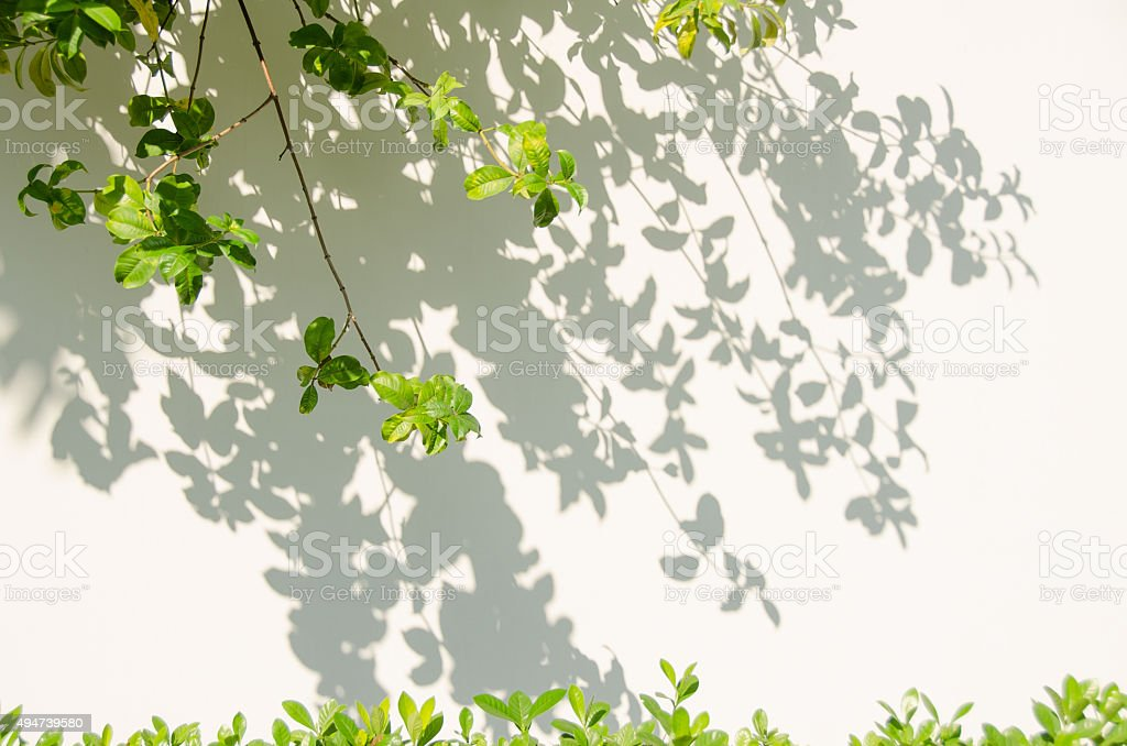 Leaves shadow on the wall. stock photo