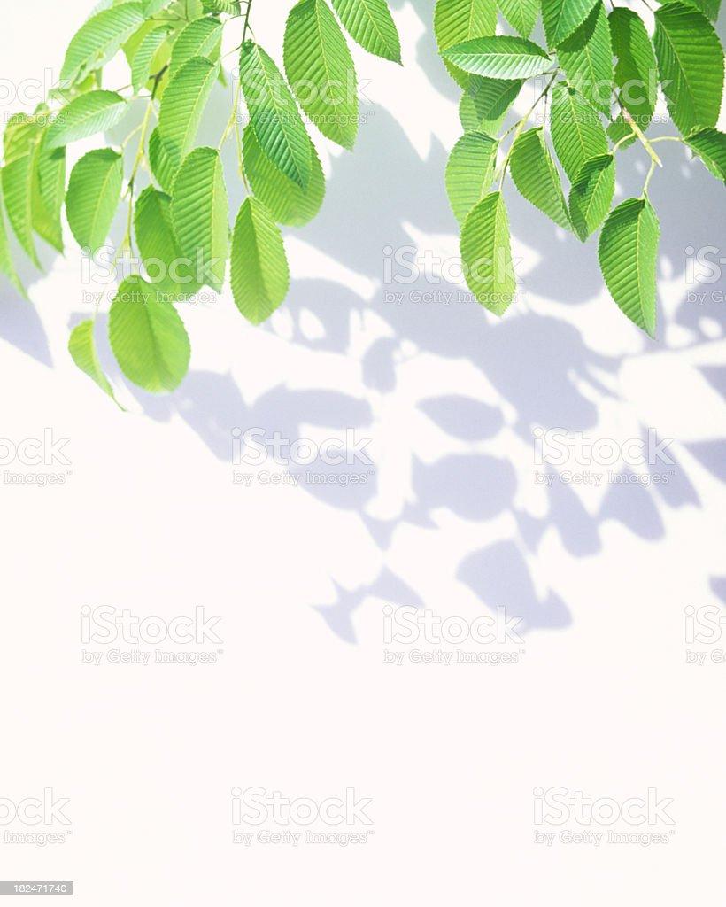 Leaves & Shadows stock photo