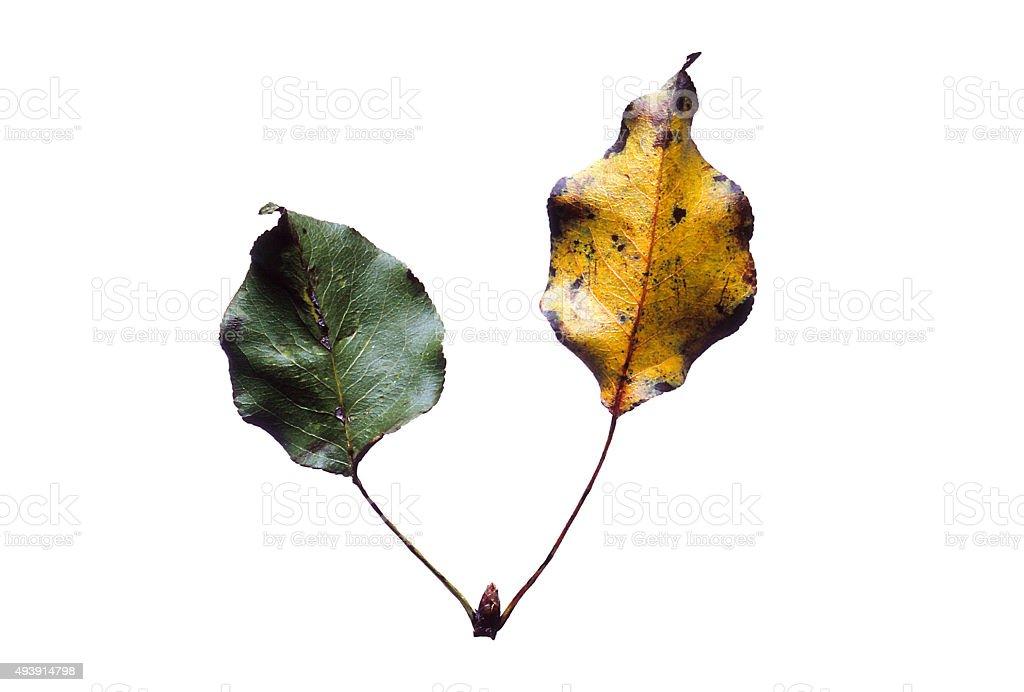 Leaves - Siblings stock photo