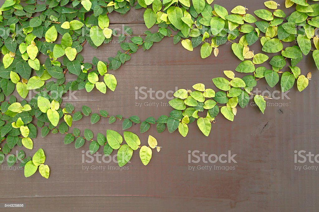 Leaves tangled in tree stock photo