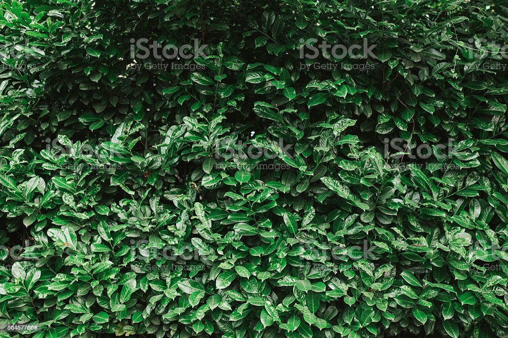 Leaves texture stock photo