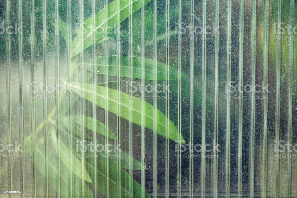 Leaves through window royalty-free stock photo