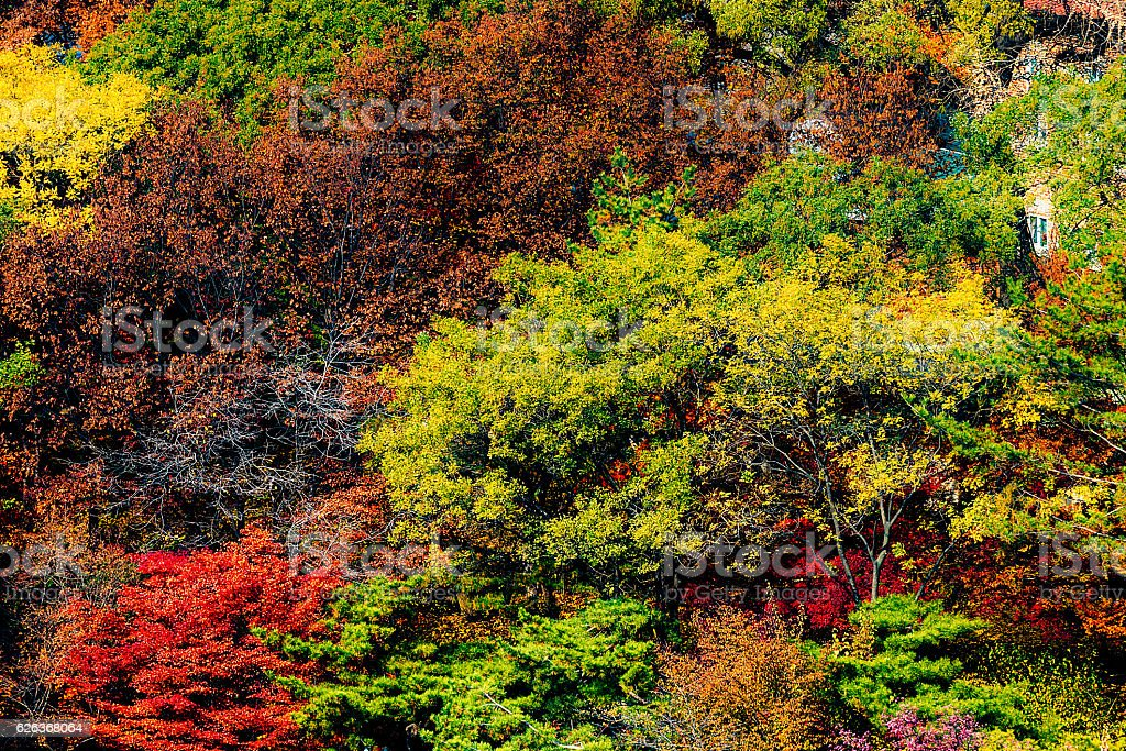 Leaves turning brown in the autumn stock photo